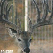 Big Rack Ranch Whitetail Genetics - Gladiator