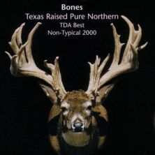 Big Rack Ranch Whitetail Genetics - Bones